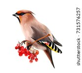 the waxwing  common waxwing  or ... | Shutterstock . vector #731576257