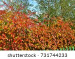 autumn nature | Shutterstock . vector #731744233