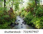 plantation in kalibaru... | Shutterstock . vector #731907907