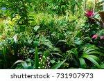 plantation in kalibaru...   Shutterstock . vector #731907973