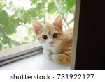cute kitten | Shutterstock . vector #731922127