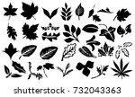 leaf   Shutterstock . vector #732043363