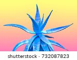 aloe. art gallery fashion... | Shutterstock . vector #732087823