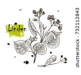vintage graphic vector leaves ... | Shutterstock .eps vector #732112843