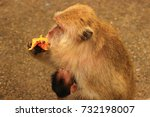 Female Macaques Cuddle Your...