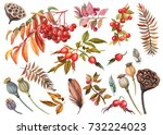 watercolor drawing  set of... | Shutterstock . vector #732224023