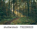 a sunbeam in a forest glade | Shutterstock . vector #732230323