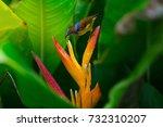 brown throated sunbird or plain ...   Shutterstock . vector #732310207