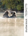 grizzly bear  ursus arctos   ... | Shutterstock . vector #732341773