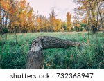 tree fallen from beaver | Shutterstock . vector #732368947