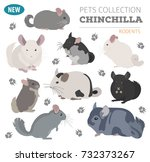 chinchilla breeds icon set flat ... | Shutterstock .eps vector #732373267