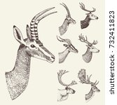 set of horn  antlers animals...