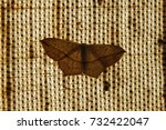 The Noctuidae Commonly Known A...