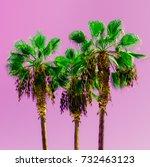 minimal fashion art. palms... | Shutterstock . vector #732463123