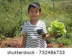 japanese boy picking lettuce ... | Shutterstock . vector #732486733