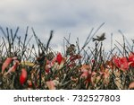sparrows on a bush in autumn.... | Shutterstock . vector #732527803