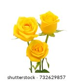 beautiful bouquet of yellow... | Shutterstock . vector #732629857