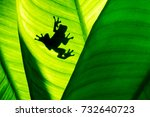 frog shadow on natural green... | Shutterstock . vector #732640723
