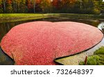 cranberry marsh in the form of... | Shutterstock . vector #732648397