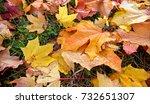Colourful Autumn Leaves Fallen...