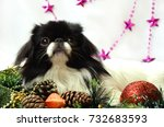 christmas and new year  little... | Shutterstock . vector #732683593