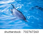 beautiful dolphin in the water. ... | Shutterstock . vector #732767263