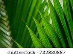 coconut leaf texture    Shutterstock . vector #732830887