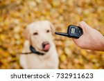 dog with electric shock collar... | Shutterstock . vector #732911623