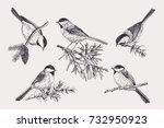 set of birds. chickadee on...   Shutterstock .eps vector #732950923