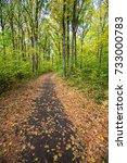 autumn road through deciduous...   Shutterstock . vector #733000783