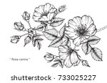 hand drawing and sketch rosa... | Shutterstock .eps vector #733025227