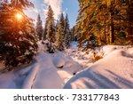 wonderful wintry landscape.... | Shutterstock . vector #733177843