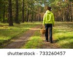 woman picking edible mushrooms... | Shutterstock . vector #733260457