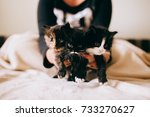 Stock photo woman holds cute three fluffy kittens 733270627