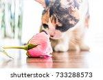 closeup portrait of curious...   Shutterstock . vector #733288573