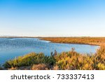 ebro delta estuary and wetlands ... | Shutterstock . vector #733337413