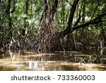 Mangrove Trees Roots By The...