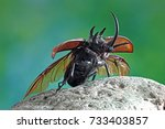 beetles   insect   the five... | Shutterstock . vector #733403857