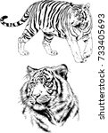 set of vector drawings on the... | Shutterstock .eps vector #733405693