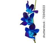 Deep Purple Orchid Isolated On...