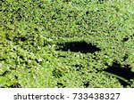 a picture of a swamp  tina ... | Shutterstock . vector #733438327