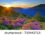 midsummer scenery of hehuan... | Shutterstock . vector #733442713