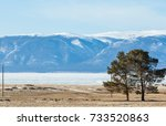 couple of pine trees stand... | Shutterstock . vector #733520863