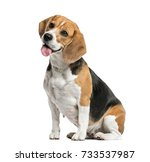 dog  beagle sitting and panting ... | Shutterstock . vector #733537987
