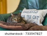cat on a couch  with a sign ...   Shutterstock . vector #733547827