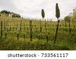 walk through woods and vineyards | Shutterstock . vector #733561117
