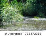 summer landscape. swamp  marsh  ... | Shutterstock . vector #733573393