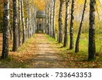 Birch Alley And Gazebo In The...