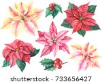 Christmas Set Of Flowers...
