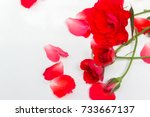 Stock photo red rose so beautiful on white background 733667137